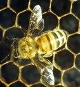 Audiolibro: Los sueños de una abeja