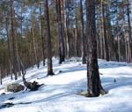 tempestad_nieve
