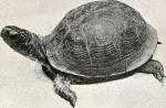 Audiolibro: La tortuga y la arogolla