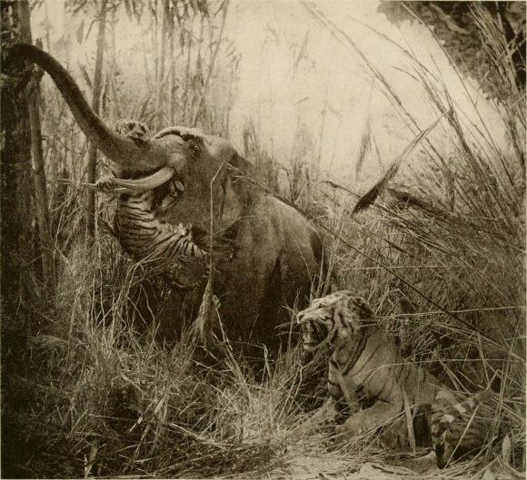 Rudyard Kipling: El libro de la selva