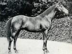 Historia de un caballo, audiollibre