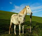 Historia d'un cavall audiollibre